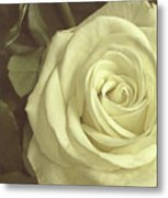 Timeless Rose Metal Print