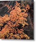 Zion Autumn Foliage Metal Print