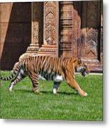 61- Sumatran Tiger Metal Print