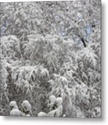 Snow And Branches Metal Print