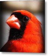 6751-010 Cardinal - Miss You Metal Print
