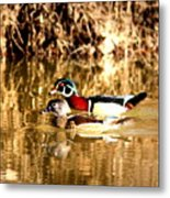 6980 - Wood Duck Metal Print