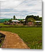 6x1 Philippines Number 123 Rice Fields Panorama Metal Print