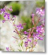 Alpine Wildflower Metal Print
