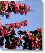 Art In Nature, Florals Metal Print