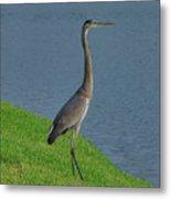 7- Great Blue Heron Metal Print