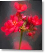 Jatropha Blossoms Painted Metal Print