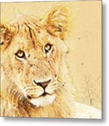 lioness Masai Mara, Kenya Metal Print