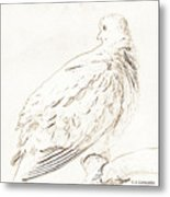 Mourning Dove, Animal Portrait Metal Print