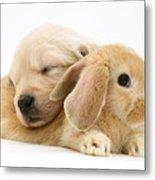Rabbit And Puppy Metal Print