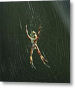 Spider On A Web Metal Print
