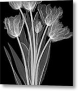 Tulips, X-ray Metal Print
