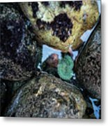 Wedding Rock At Patrick's Point State Park - California Metal Print