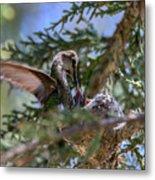 7311 Tilted Nest Feeding Metal Print