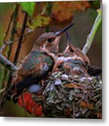 7389 All Feathered Out Metal Print