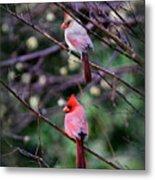 7440-008 Cardinal Metal Print