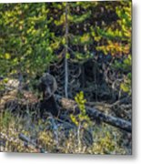 791 In The Forest Metal Print