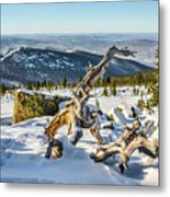 Amazing Winter Landscape With Frozen Snow-covered Trees On Mountains In Sunny Morning  Metal Print