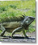 I Iguana Metal Print