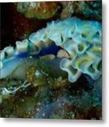 Lettuce Sea Slug Metal Print