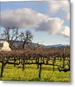 Napa Valley Vineyard Metal Print