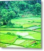 Rice Fields Scenery Metal Print