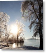 Trees In Ice Series Metal Print