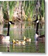8132 - Canada Goose Metal Print