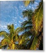 8167- Palm Tree Metal Print