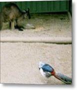 Australian Native Animals Metal Print