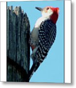#8671 Woodpecker Metal Print