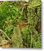 Mosses And Liverworts 8861 Metal Print