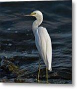 89- Snowy Egret Metal Print