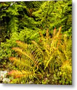 Fall Color Fern Metal Print