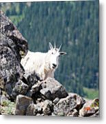 Hiking The Mount Massive Summit Metal Print