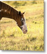 Horse In The Countryside  Metal Print