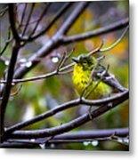Img_0001 - Pine Warbler Metal Print