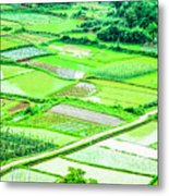Rice Fields Scenery Metal Print