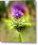 Silybum Eburneum Milk Thistle Metal Print
