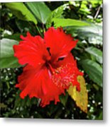 The El Yunque National Forest, Puerto Rico Metal Print