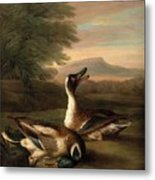 Two Drakes In Landscape Metal Print