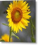 #933 D958 Best Of Friends Colby Farm Sunflowers Newbury Massachusetts Metal Print
