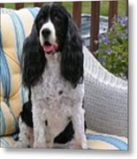#940 D1034 Farmer Browns Springer Spaniel Metal Print