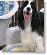 #940 D1036 Farmer Browns Springer Spaniel Happy For You Have A Happy Day Metal Print