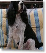 #940 D1045  Farmer Browns Springer Spaniel Metal Print