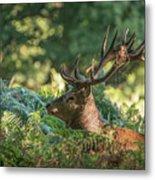 Majestic Powerful Red Deer Stag Cervus Elaphus In Forest Landsca Metal Print
