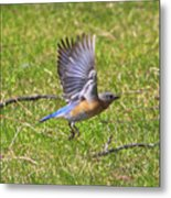 A Afternoon With Mr Blue Bird-4 Metal Print