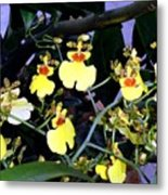 A Ballet Of Tiny Orchids Metal Print