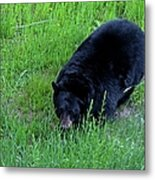 A Bear Over There Metal Print