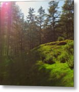 A Beautiful Day In Woods Metal Print